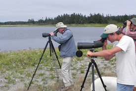 Bird watching Conservation Volunteers event, Brier Island, Nova Scotia (Photo by NCC)